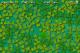 Lucky Clover 1.5.1 full screenshot