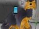 Poor Little Dog: Yorkie 1.3 full screenshot