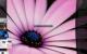 Emerge Desktop 6.1.3 full screenshot
