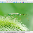 Easy Photo Studio FREE for Mac 3.0.6 full screenshot