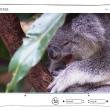 Gihosoft Free Video Cutter 1.2.1 full screenshot