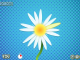 Multiplayer Daisy Petals 1.0.1 full screenshot