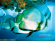 Fish Calendar Windows Theme 5.0 full screenshot