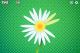 Daisy Petals 1.3.2 full screenshot