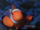 FishCalendars.com 2016 Calendar Theme 1.0 full screenshot